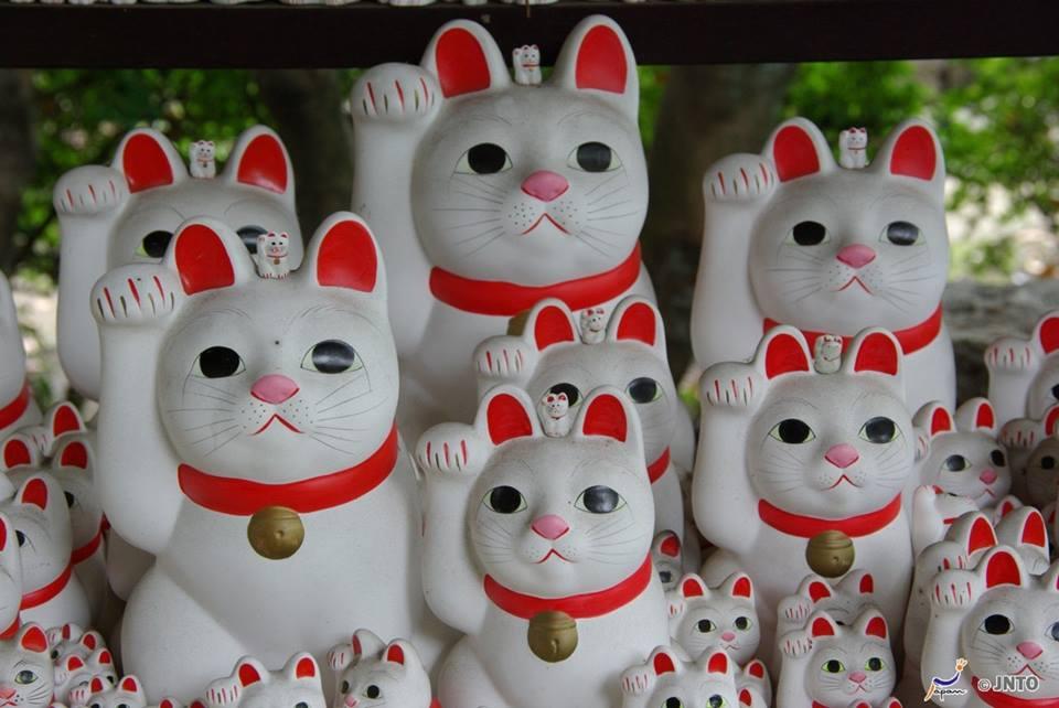 il tuo gatto datazione matchmaking cinese